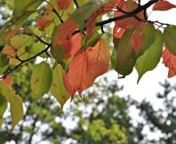 가을. 나뭇잎
