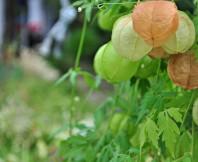 열매,가을