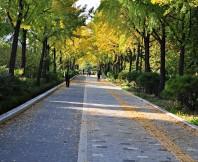 가을,길,낙엽